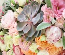Delikatny pudrowy róż w Kameliowym Zakątku